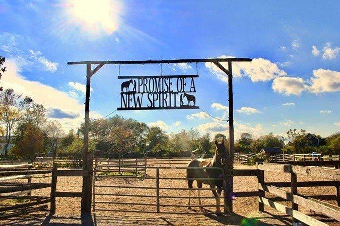 Spirit's Promise Equine Rescue